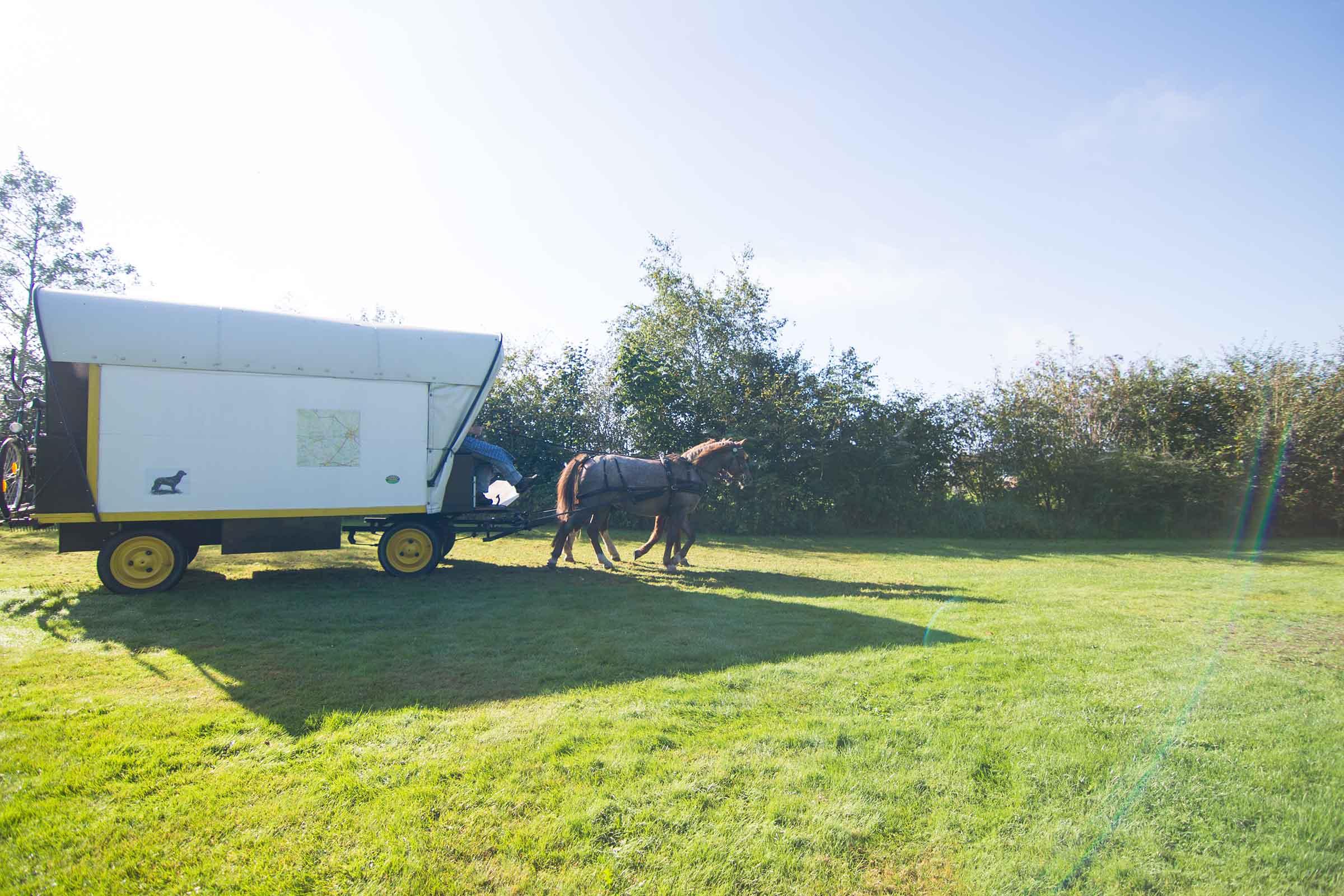 Horse Caravan